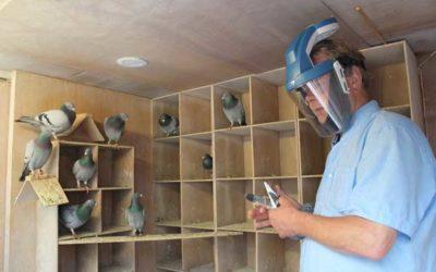 Voorkom de duivenmelkerslong met behulp van het KITE P3 luchtmasker