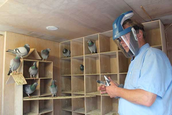 AZdembewscherming duivenstof en duivenmelkerslong